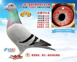 上海�义�公棚四关综合鸽王20位