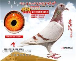2017年河北张家口万佳公棚决赛349名