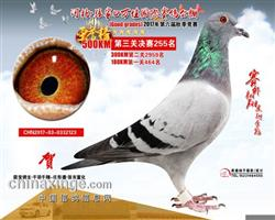 2017年河北张家口万佳公棚决赛255名