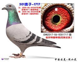 501直子-1717