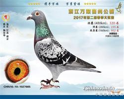 2017年春浙江万顺公棚决赛320名