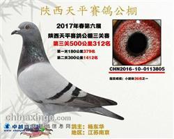 2017年春陕西天平赛鸽公棚决赛312名