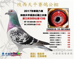 2017年春陕西天平赛鸽公棚决赛15名