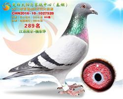2017年春云南太阳鸟公棚决赛289名