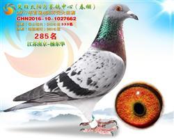 2017年春云南太阳鸟公棚决赛285名