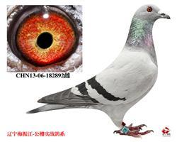 13北京惠翔参赛鸽