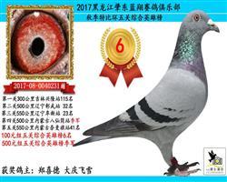 2017年五关鸽王季军