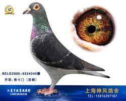 上海神风鸽舍