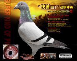 CHN2015-16-0228003