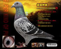 CHN2015-16-0228053