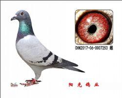 conew_chn2017-06-0007253 雌副本