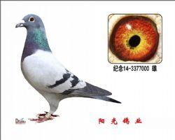 conew_纪念14-3377000 雄副本