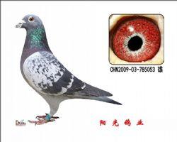 conew_chn2009-03-785053 雄副本
