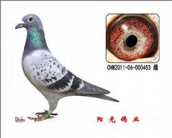 conew_chn2011-06-000453 雌副本