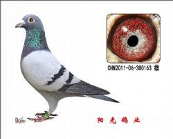 conew_chn2011-06-380163 雄副本