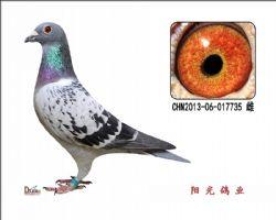 conew_chn2013-06-017735 雌副本