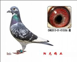 conew_chn2013-01-015306 雌副本
