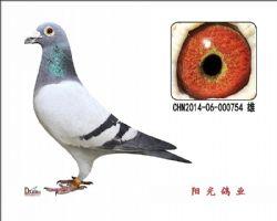 conew_chn2014-06-000754 雄副本