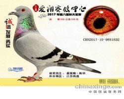 江苏爱翔赛鸽中心500公里决赛530名