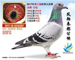 陕西凤翔秦都赛鸽公棚决赛12名