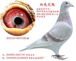 公棚三关冠军母亲-红色花魁【非卖品】