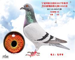 17年秋汾阳7270羽6名(售新疆)