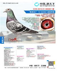 CHN2012-01-565061- 雄