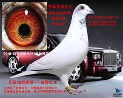 2010-白色夺冠系011号白黄雄
