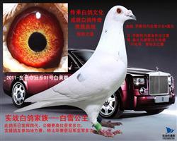 2011-白色夺冠系01号白黄雌