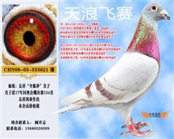 令狐冲直子621