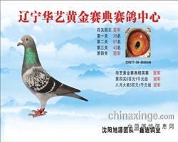 2017年华艺金赛鸽俱乐部四关鸽王亚军