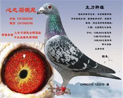 春节馈赠1000元专区