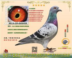 2015年宁夏银川市鸽会500公里3名