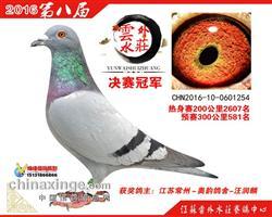 2016年云外水庄决赛冠军