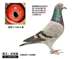 昊翔信鸽文化交流中心