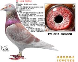 TW-2014-666552