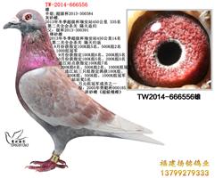 TW-2014-666556