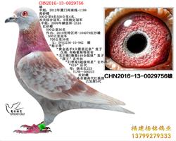 CHN2016-13-0029756