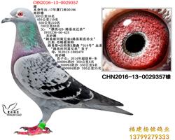 CHN2016-13-0029357