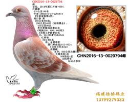 CHN2016-13-0029794