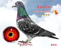 天王072