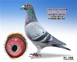 龙鑫698