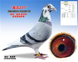 龙鑫237