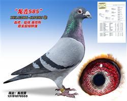 龙鑫585