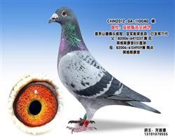 龙鑫040