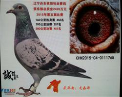龙鑫765