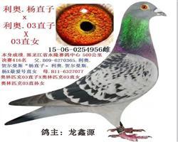 龙鑫956