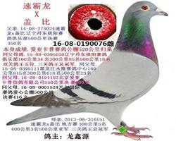 龙鑫076