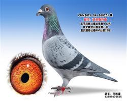 龙鑫251