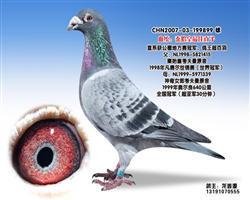 龙鑫899